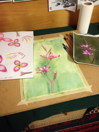 Wash dry, working on background flowers and buds